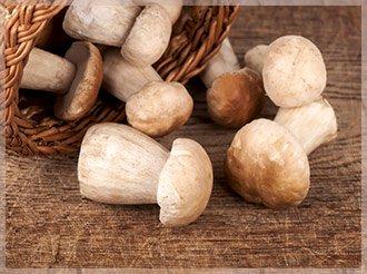 Белый гриб купить Украина