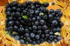 дикорастущие плоды и ягоды, черника, купить в Киеве, Украина