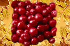 Wild berries Cranberry