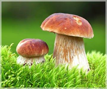Где купить белые грибы